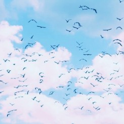 clouds birds 2